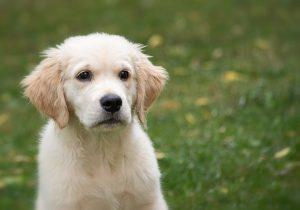 Hund Warnweste